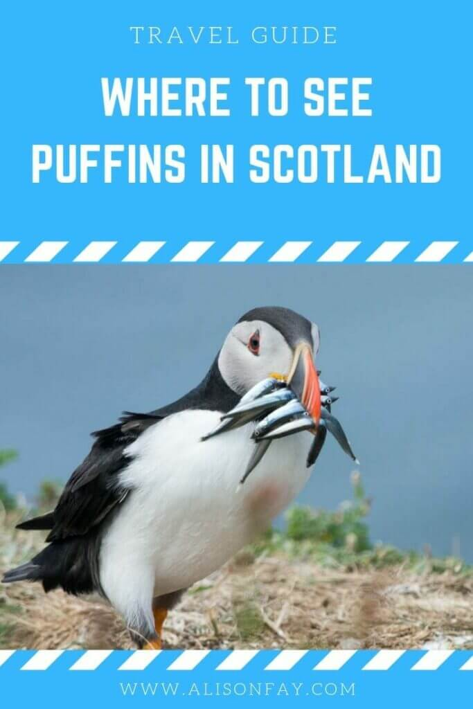 Where to see puffins in Scotland