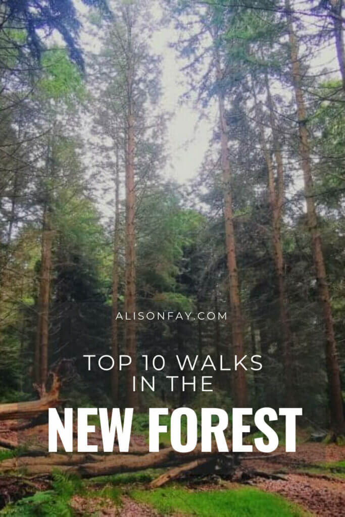 Top 10 walks in the new forest